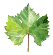A leaf in the French city of Châteaubriant.